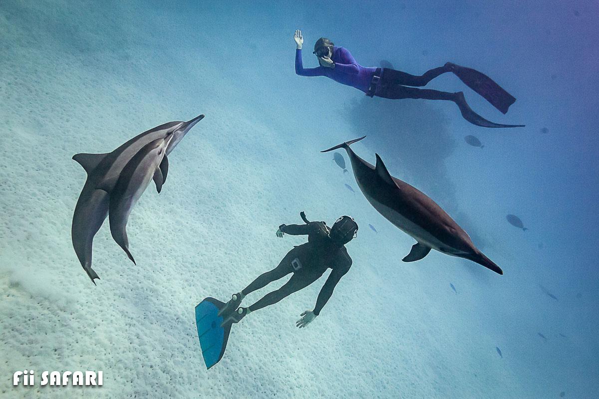 Potápění s delfíny, autor: Karel Fiala