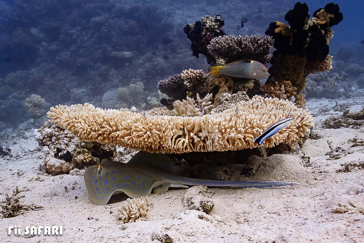 Rejnok a korály – FII Safari, autor: Karel Fiala
