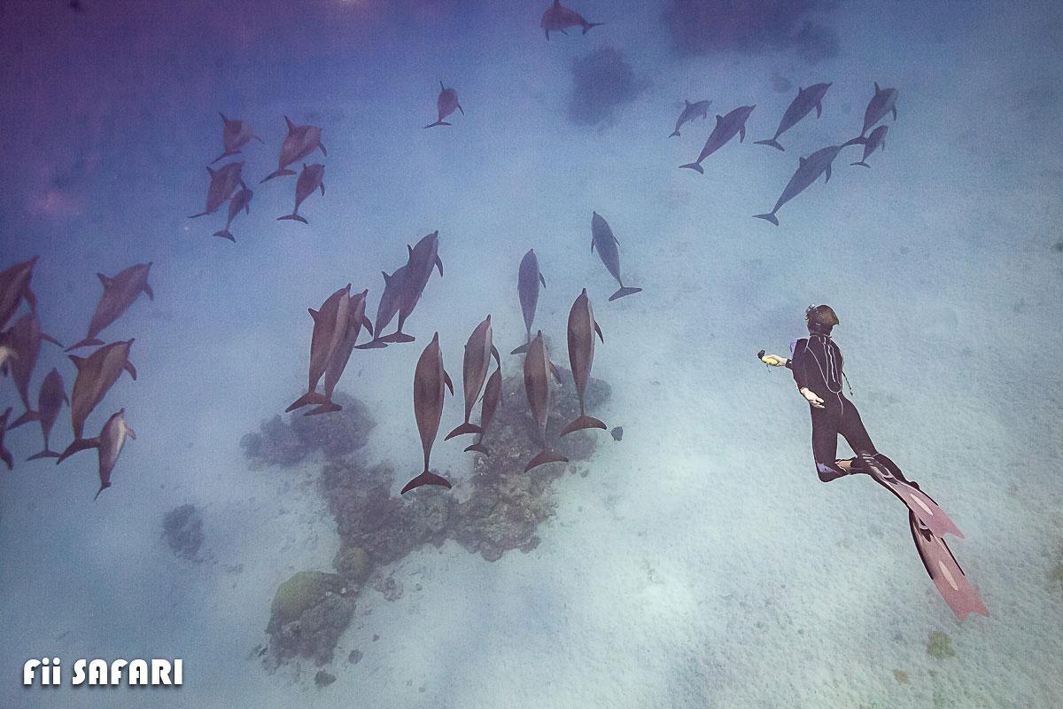 Freediving s delfíny, autor: Karel Fiala