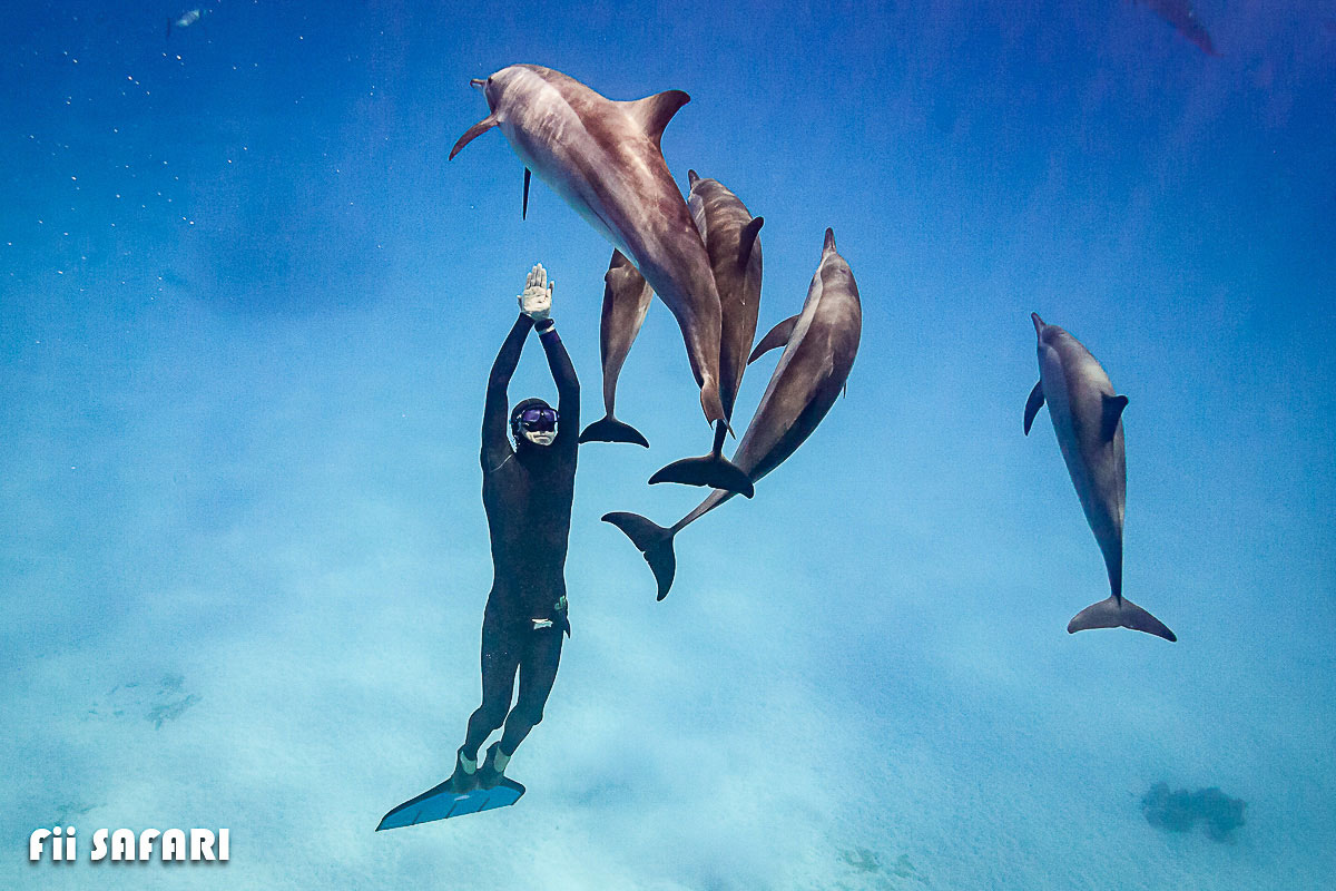 Martin Cheníček plave s delfíny, autor: Karel Fiala