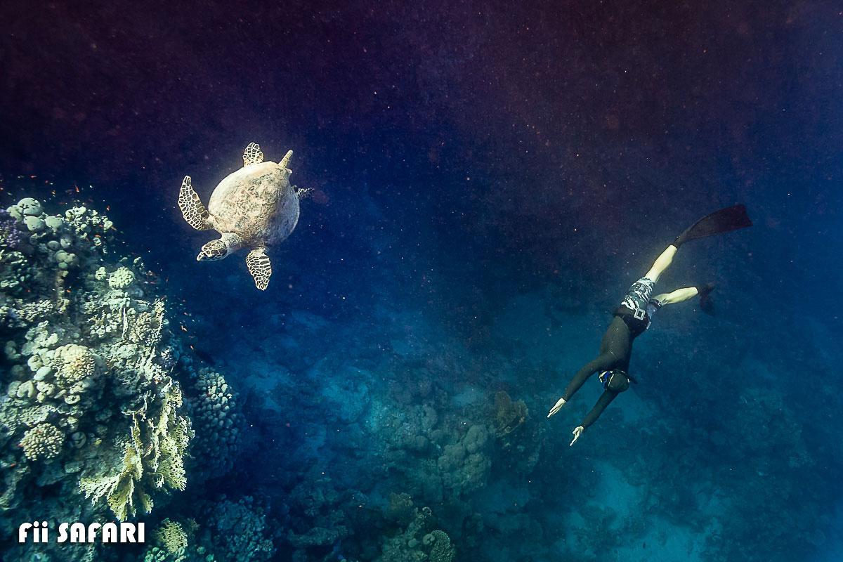 Potápění s mořskou želvou, autor: Karel Fiala