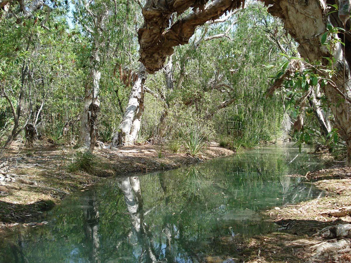 Australská divočina, autor: Pavlína a Vráťa Řehola