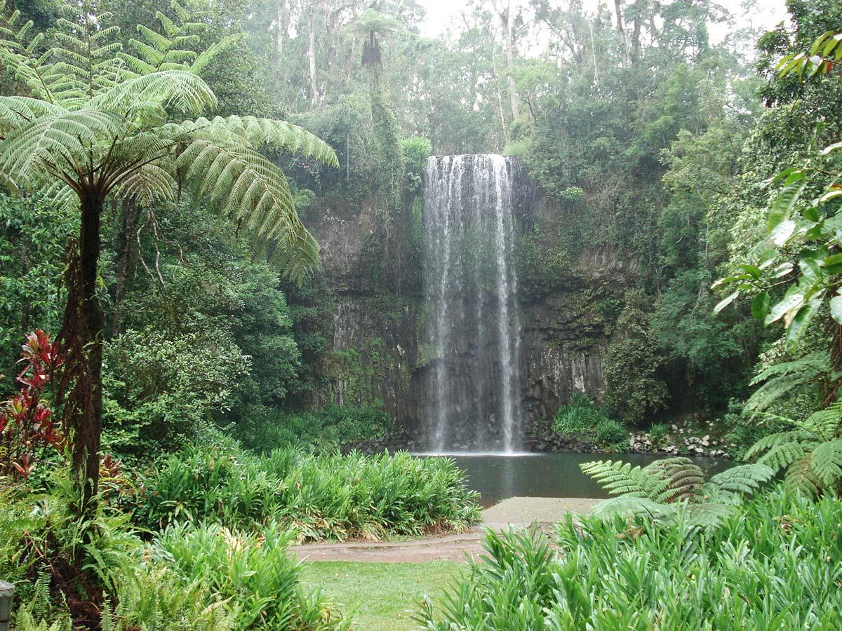 Deštný prales (Queensland, Austrálie), autor: Pavlína a Vráťa Řehola