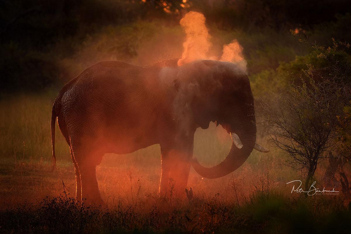 Slon africký v Botswaně, autor: Petr Bambousek